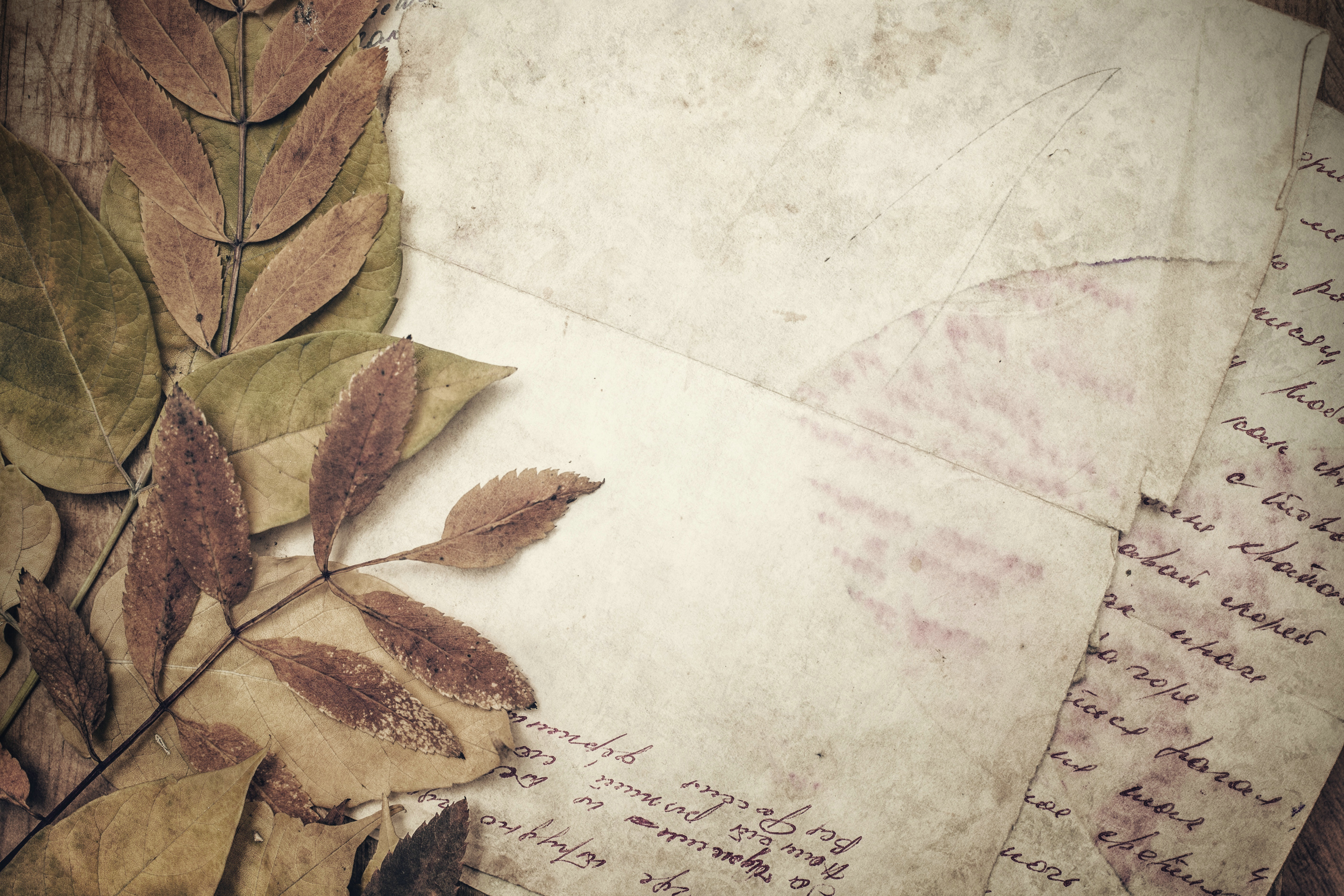 The Gallery For R Love Alphabet Wallpapers: Vintage-leaves-and-letter-free-desktop-wallpaper-5606×3737
